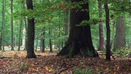 Freies Betretungsrecht für Solothurner Wälder.