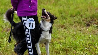 Einen Hund kann man nicht in vier Stunden erziehen.Symbolbild/bar