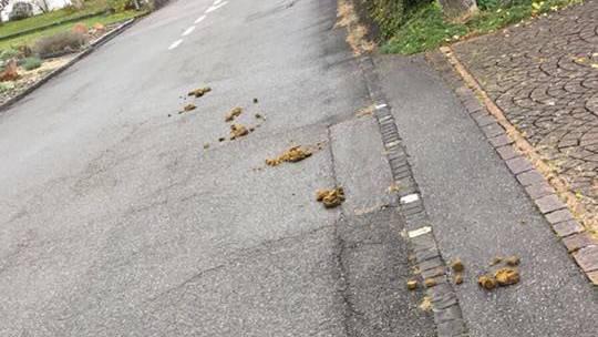 Zu diesem Bild schrieb der Gemeinderat Rekingen: «Werte Pferdebesitzer die den Kot einfach liegen lassen! Das muss nun wirklich nicht sein. Das gleiche gilt für Hundebesitzer!»