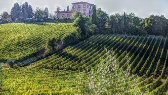 """Ohne die """"Clandestini"""" würde Italiens Landwirtschaft am Boden liegen. (Bild: Pixabay)"""