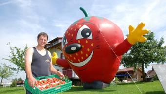 Willi Staubli, Präsident der Vereinigung Aargauischer Beerenpflanzer präsentiert stolz ein Kistchen frisch gepflückter Aargauer Erdbeeren. (Bild Toni Widmer)