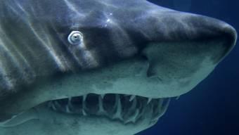 Das Meer ist der natürliche Lebensraum des Hais (Symbolbild)