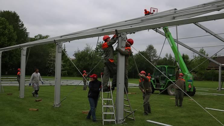 Gestern stellten Zivilschützer auf dem Allmend-Areal das 25 Meter breite und 50 Meter lange Festzelt auf, das Platz für 1600 Personen bietet.