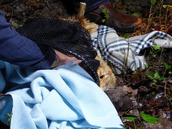 Seine Retter hielten ihn mit Decken warm.