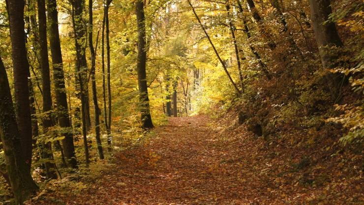 Der Kanton Aargau bestreitet, dass die Kreisförster zu stark nach Fehlern suchen. Im Bild: Waldweg in Biberstein. (Archiv)