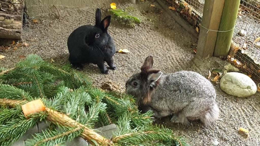 Kaninchen Stacy und Nero