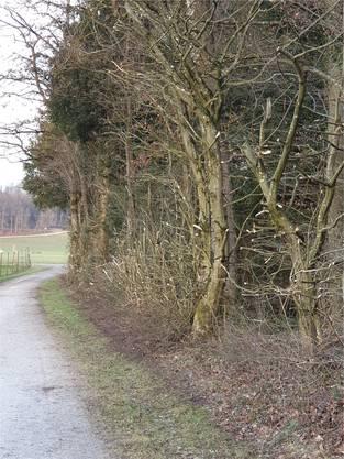 Im Frühjahr werden die Hecken und Bäume zurechtgestutzt.