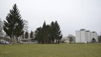 Auf der Wiese neben dem Kindergarten Pappelweg wird das Kindergarten-Provisorium gebaut.