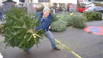 Es brauchte einiges an Kraft, um die Bäume zu werfen, wie das Video zeigt.