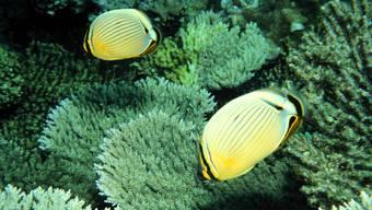 Durch die Meeresschutzzone sollen die Biodiversität sowie Riffe und Inseln erhalten bleiben (Symbolbild)
