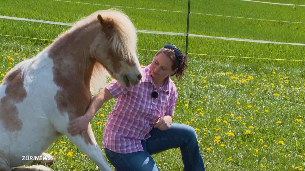 Solidaritätswelle hilft Reithof Pony Town aus der Corona-Bredouille