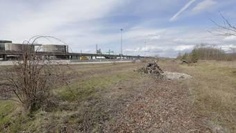 Das ehemalige Rangierareal der Deutschen Bahn ist das bedeutendste Naturgebiet Basels. Neben die Bahngeleise im Hintergrund sollen das neue Hafenbecken und das Containerterminal gebaut werden.