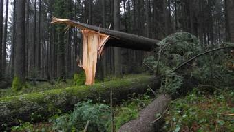 Im Wald zwischen Nennigkofen und Lüterkofen hinterliess «Burglind» seine Spuren. (Archivbild)
