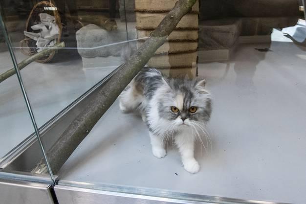 Neues *Tierheim* wird am Donnerstag eröffnet. Wir gehen mit, wenn sie Katzen und Kleintiere dorthin transportieren. Angekommen am neuen Ort