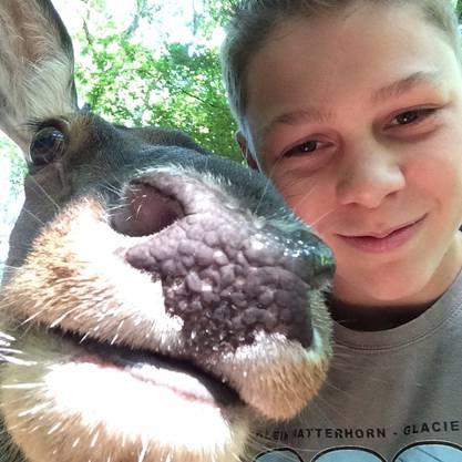 Mike (13) aus Kölliken traut sich mit einer Rothirsch-Kuh ein Selfie zu machen – aus dem Wildpark in Meissner-Germerode (Deutschland).