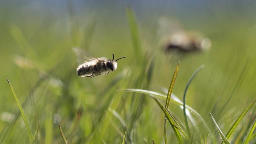 Zehntausende Bienen qualvoll erstickt