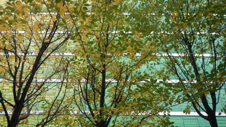 Herbststimmung ... urban ...