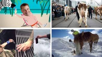 Ganz schön tierisch und ein bisschen verrückt: Die Videos der Woche.