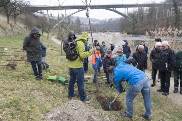 """Baumpflanzaktion von der Natur- und Heimatschutzkommission Obersiggenthal am Kappisee. Die ersten Bäume, die gepflanzt wurden, hat der Biber gefällt. Neun """"Paten"""" pflanzen jetzt neue Zwetschgenbäume."""