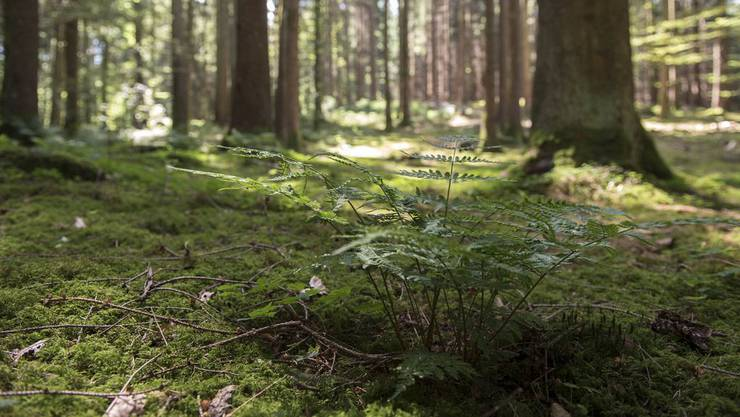 Nächstes Jahr wird über die Mega-Fusion im Suhrentaler Forst entschieden. (Symbolbild)