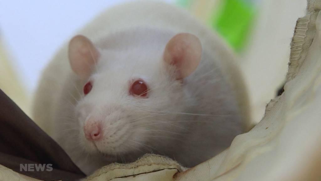 25 Jahre im Namen der Ratte