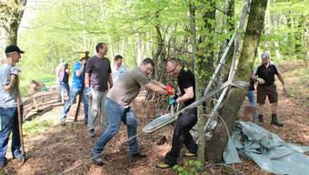 Mit einem Seilzug zogen die Teilnehmer des «Corporate Volunteering» eine Esche aus dem Graben.
