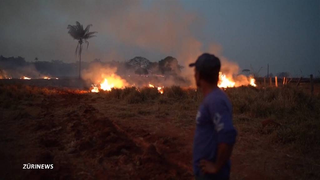 Amazonas-Brände werden auch am G7-Gipfel zum Thema