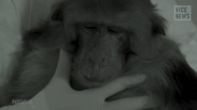 Tier- und Menschenversuche!