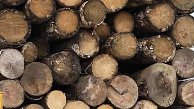 Forschende entwickeln ein faltbares Holz
