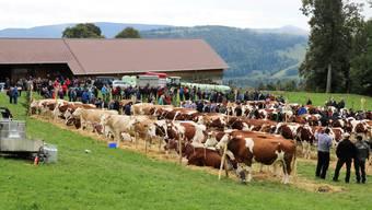 Viehschau Passwang 2018