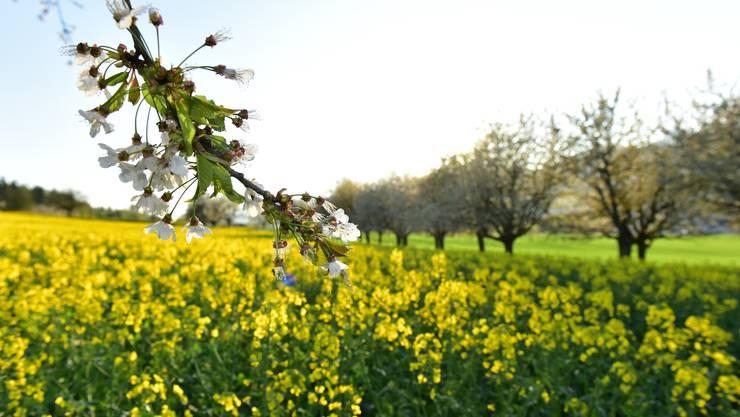 Frühlingserwachen in der Region Olten.
