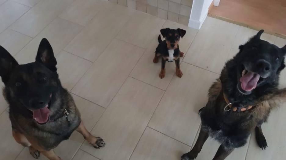 Oberaargauerin soll ihre eigenen drei Hunde qualvoll getötet haben