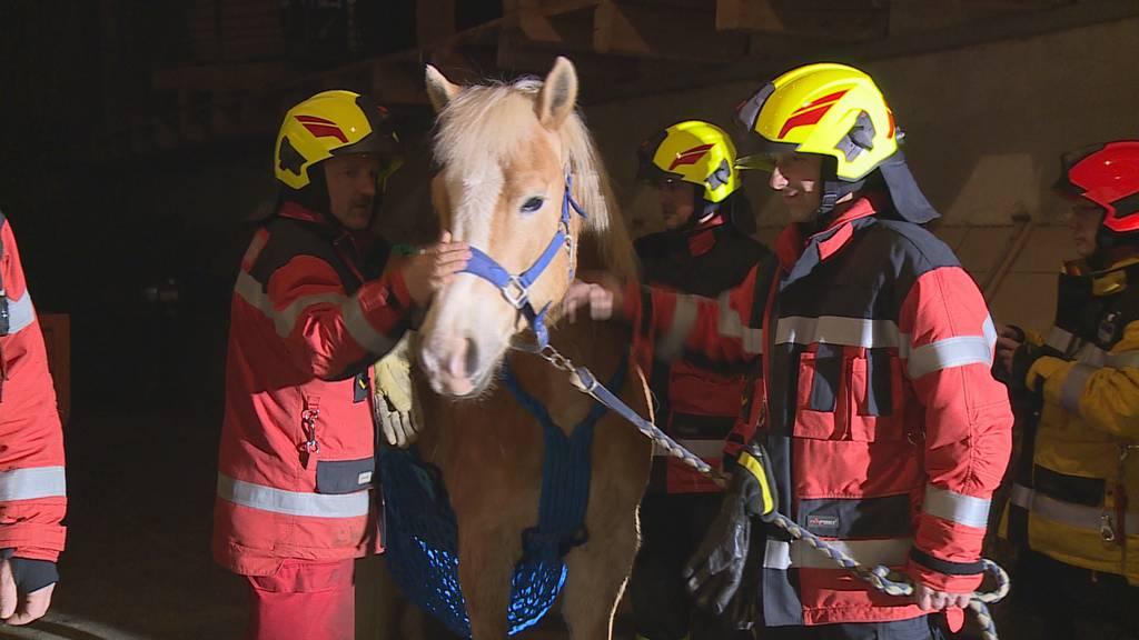 Tierische Übung – Feuerwehr als Pferdeflüsterer
