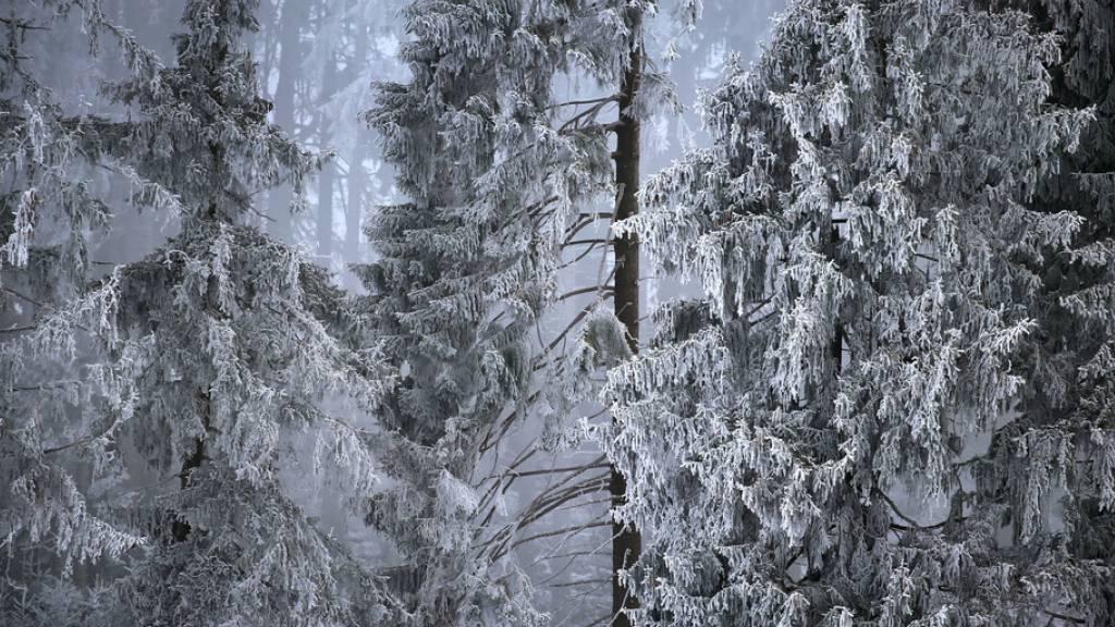 Wieder bitterkalte Winternacht in der Schweiz