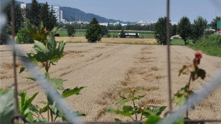 Das rund 40 Hektaren umfassende Gebiet Niderfeld ist die letzte grose Baulandreserve in Dietikon.jpg