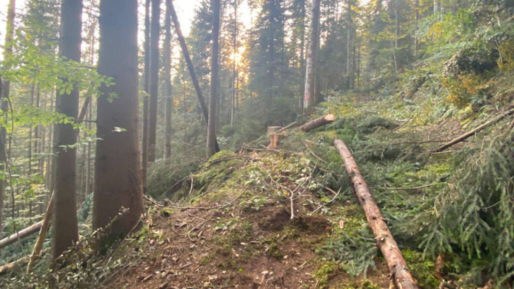 Der Baum traf einen 13-jährigen Schnupperstift und verletzte ihn lebensbedrohlich.