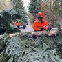 Forstarbeiter machen den Weg frei, nachdem durch Sturmwinde umgestürzte Bäume die Durchfahrt versperrt haben.