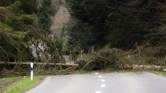 Am Dienstagmorgen stürzte dieser Baum auf die Strasse zwischen Bünzen und Bremgarten. Die Strasse musste von der Feuerwehr gesperrt werden.