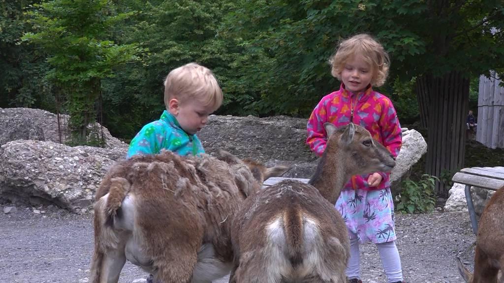 +41 Spezial: Nach Corona-Pause: Startschuss im Tierpark