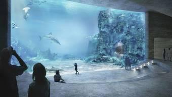 Im Ozeanium können die Besucher, wenn das Gebäude dann steht, bis zu zehn Haie beobachten.