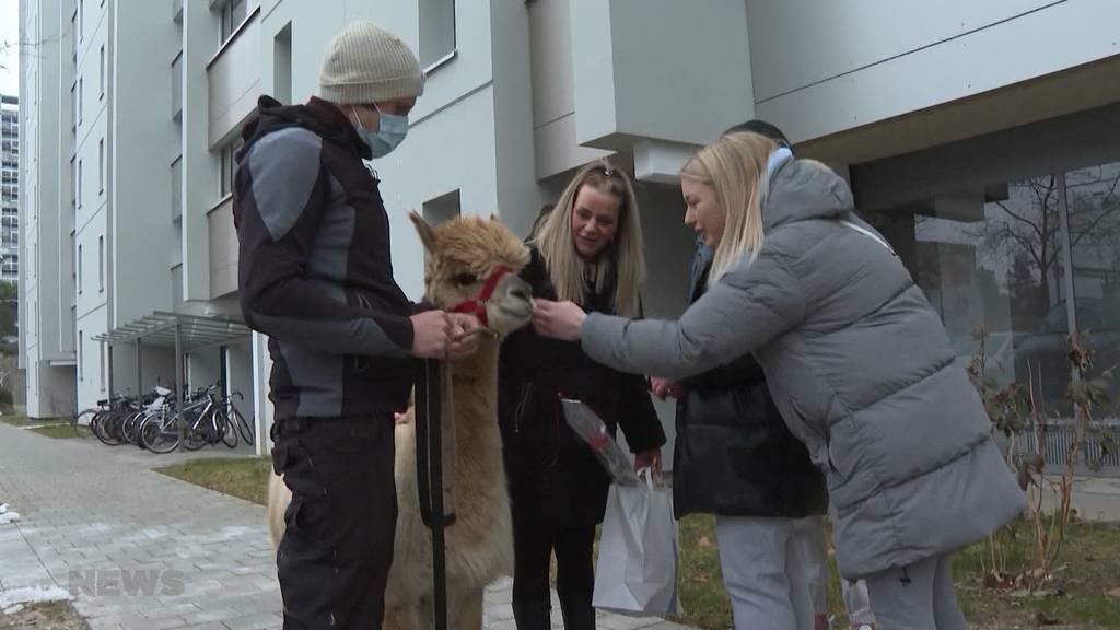 Flauschige Überraschung: Alpaka-Rosenkuriere sorgen für besondere Valentinstags-Geschenke