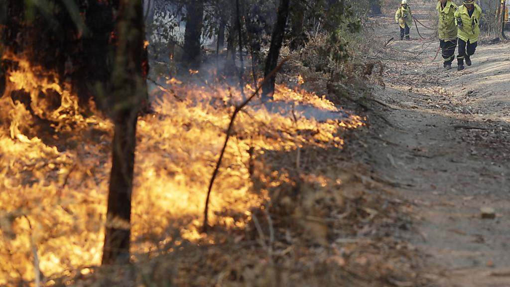 Brände in Australien belasten zusehends Tourismusgeschäft