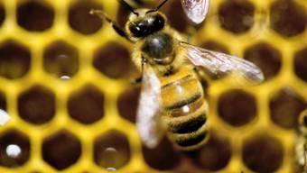 Die Schweizer Imker verlangen zum Schutz der Bienen Zurückhaltung im Umgang mit umstrittenen Pestiziden.