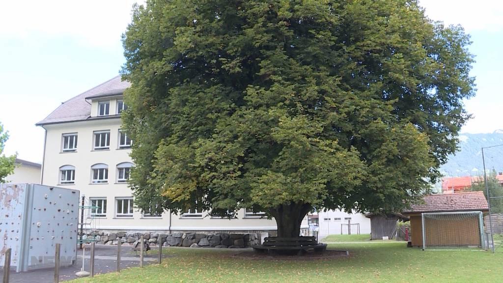 Wilderswil: Uralter Baum soll gefällt werden