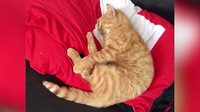 Katze erschossen: Jäger verliert Patent