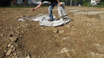 usgrabungsleiter Jakob Baerlocher bei den Arbeiten im Gänsacker in Frick.