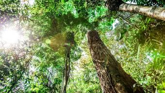 Mehr als die Hälfte aller Baumarten kommt jeweils nur in einem Land vor. Thinkstock