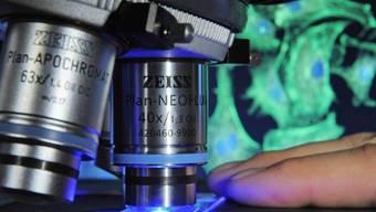 Eine Gewebeprobe unter dem Mikroskop (Symbolbild)