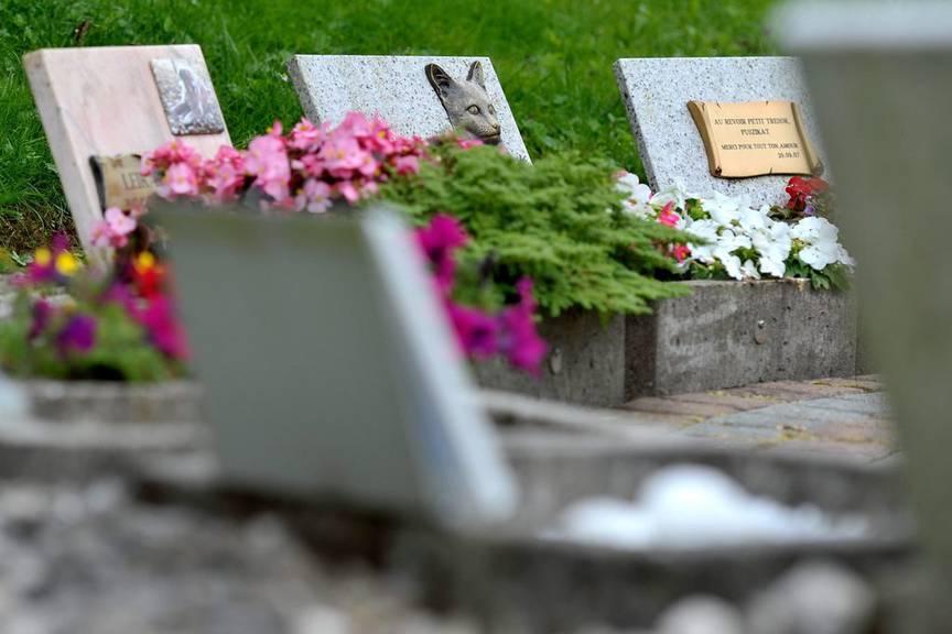 Das geliebte Haustier auf dem Friedhof besuchen zu können, bietet für manche Menschen Trost. (Symbolbild)