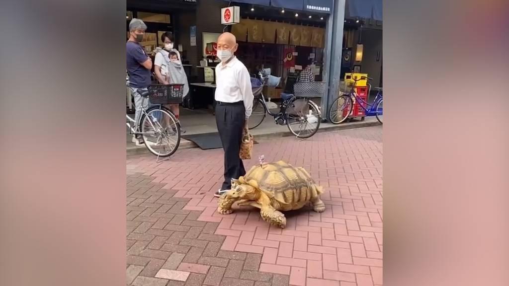 Eine Riesenschildkröte als Haustier? - Mit Vergnügen!